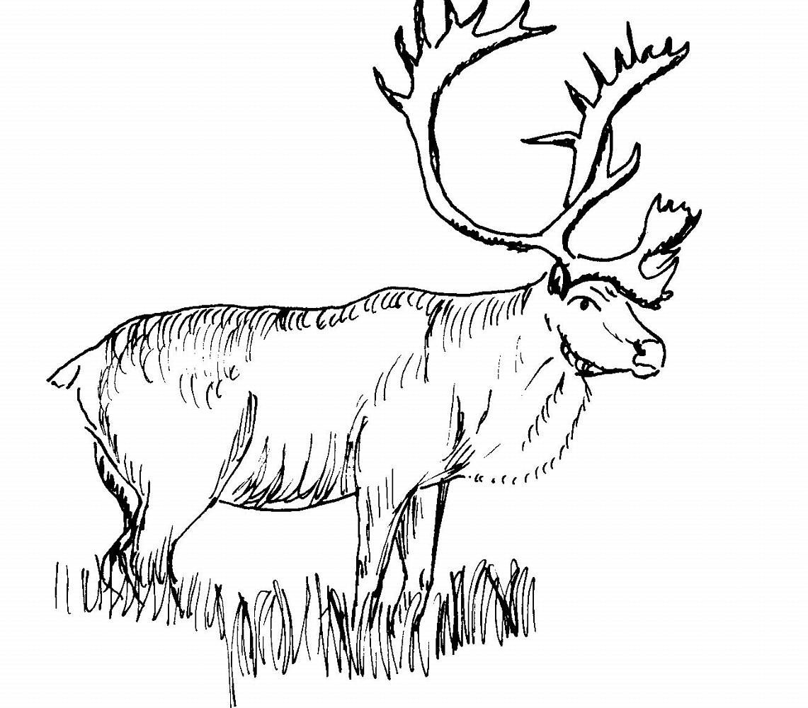 Kd 7 coloring pages - Caribou Google Search Kids Coloring Pageshand