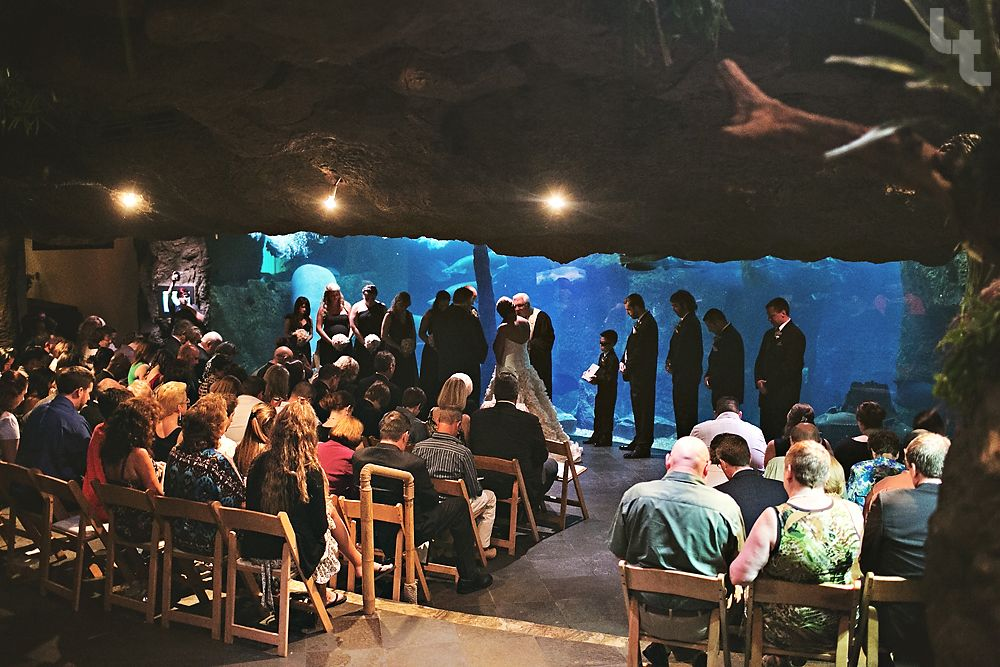 Dallas World Aquarium Wedding Calvin Aaron