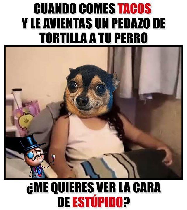 A Tu Perro No Lo Puedes Enganar Mejores Memes Perros Memes