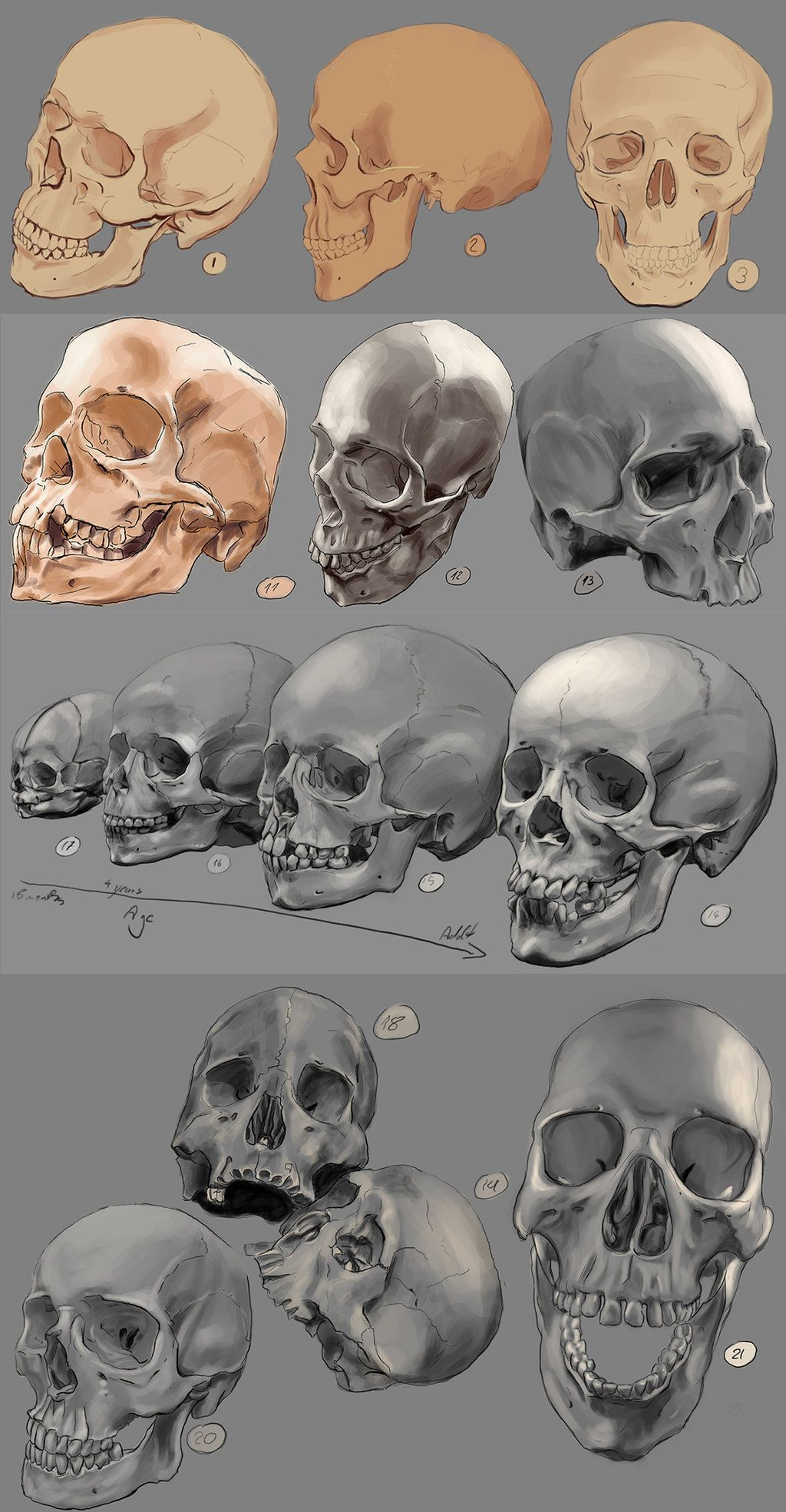 80437daf69bc0 Drawing practise  The human skull by IgnazioDelMar on DeviantArt ...