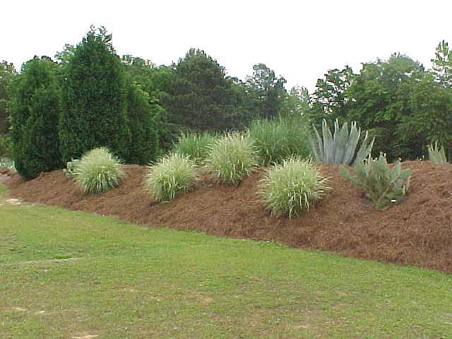 nicely planted berm - privacy