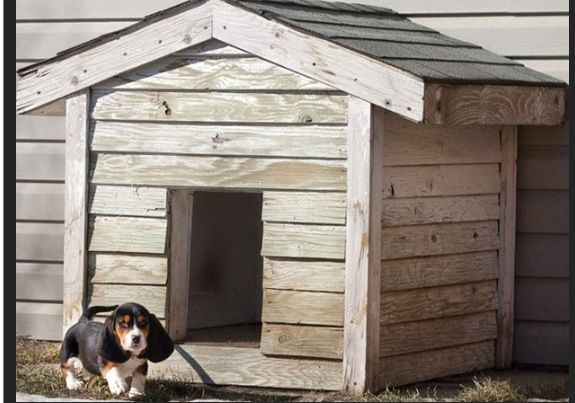Basic dog house.