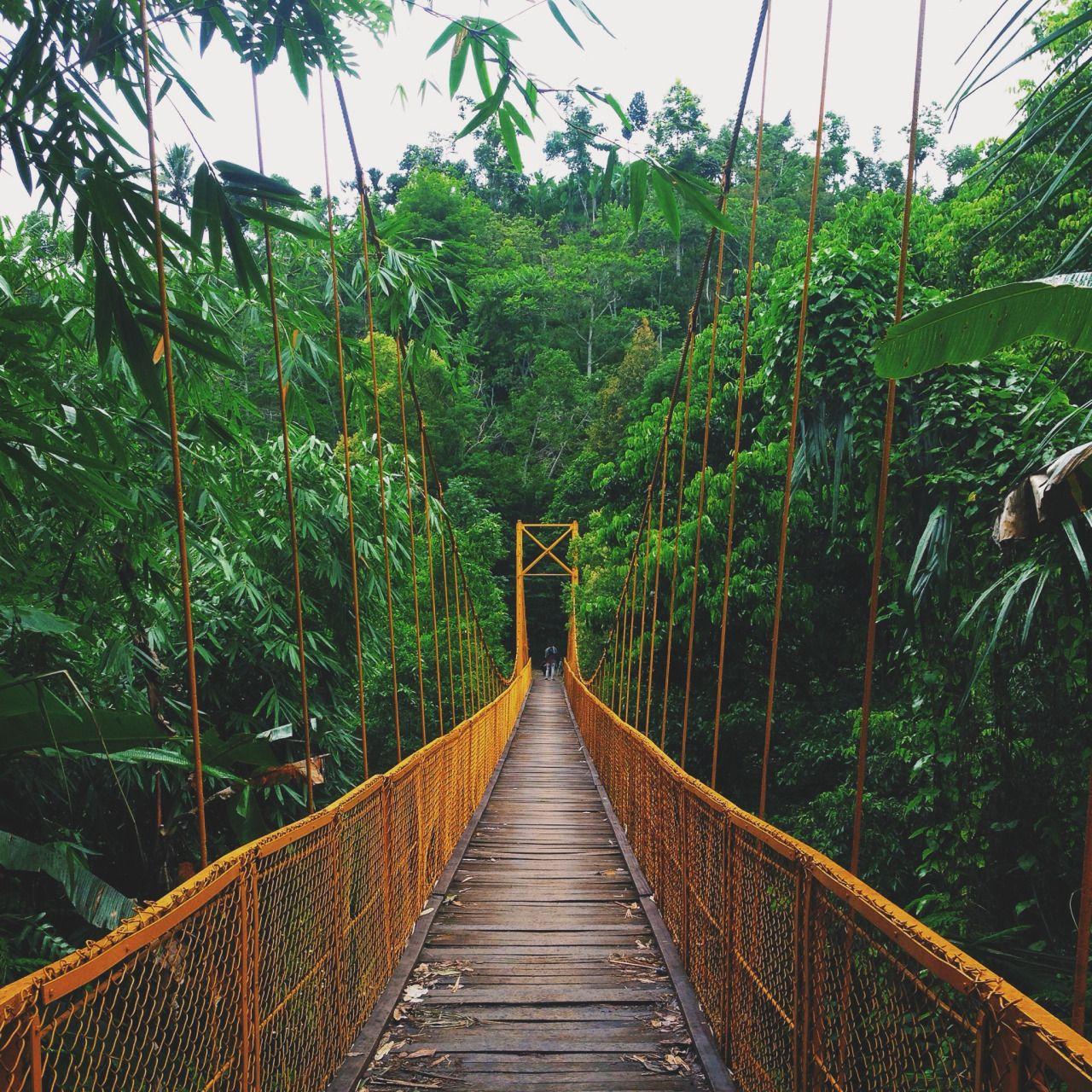 Jungle/tropical blog - let's have an adventure   Surf trip ...