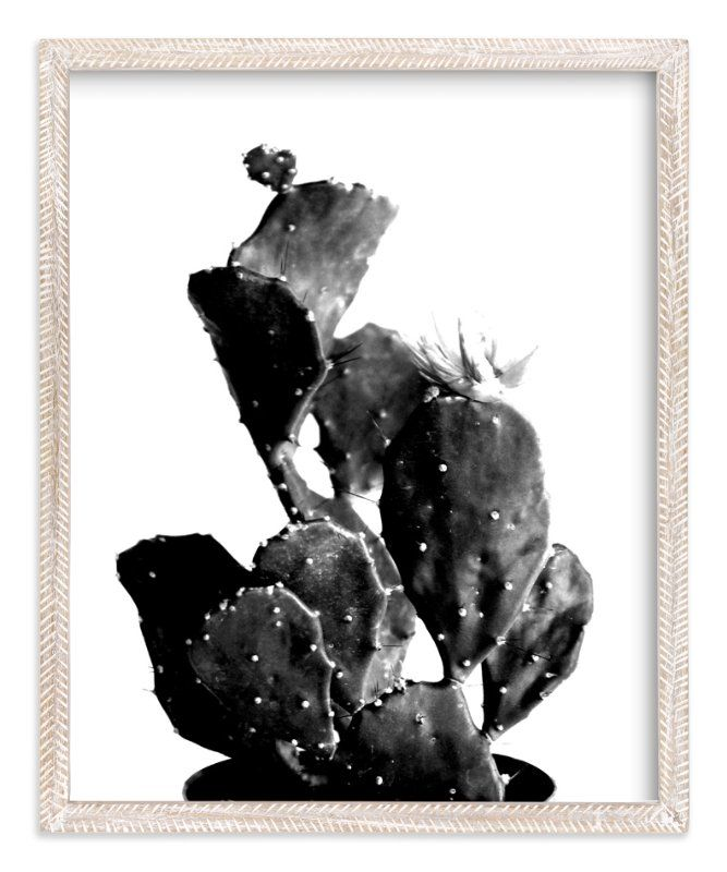 "Photo of ""black cactus"" – Photography Limited Edition Art Print by Baumbirdy."