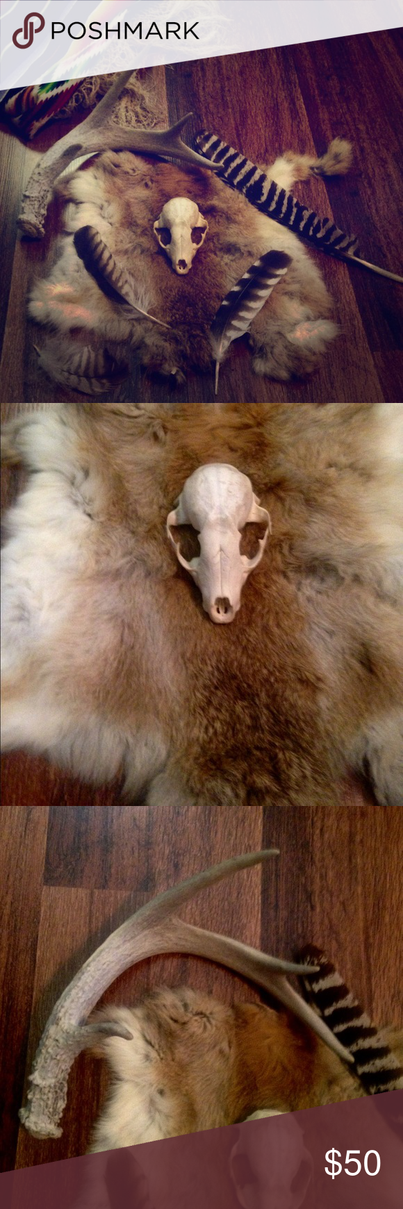 Skull, Rabbit Fur, Feather, Antler Collection All completely Real. 3 Feathers, Rabbit Fur, A Fox skull? Not sure, but looks pretty darn close, ( And told by my Hunter friends), Deer 🦌 Antler. Price Firm. I'm an avid hiker. I have quite a collection. I'll be listing more items soon! Tamara's Adventures  Other