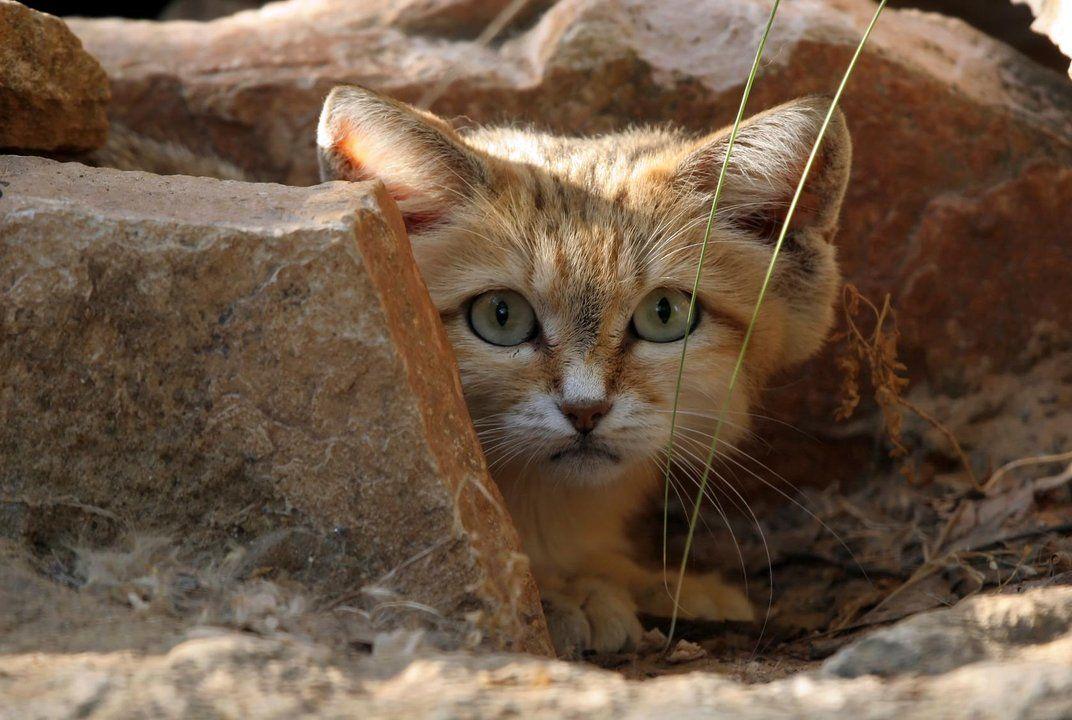 Want Arabische zandkatten horen dus alles met die schitterende apparaten