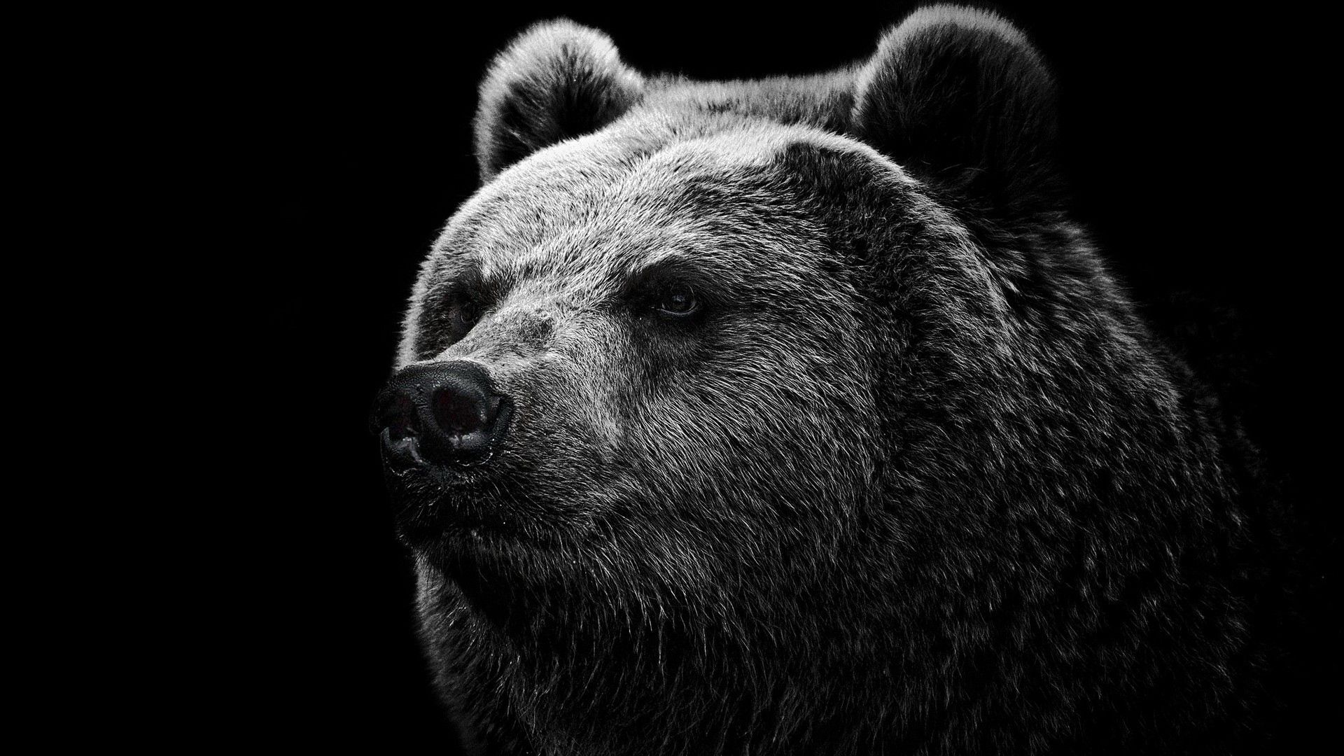 Cute Bear Face Black Black White Download Hd Wallpaper