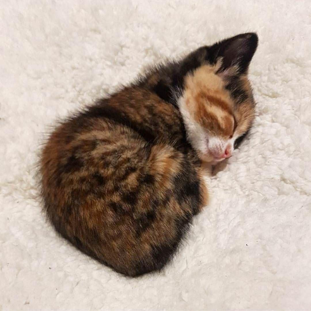 Contentment Http Ift Tt 2mhang8 Cute Animals Cute Baby Animals Sleepy Kitten
