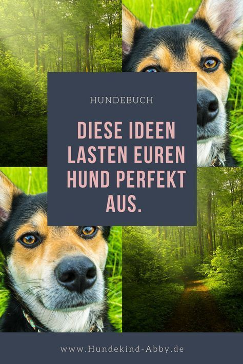 Photo of Advertisement: The great sniffing book for everyone.   Hundekind Abby Hundeblog