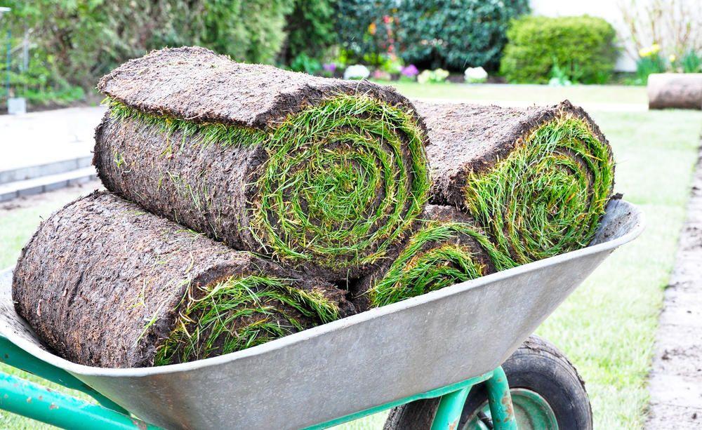 Was Kostet Rollrasen Mit Diesen Preisen Konnen Sie Rechnen Rasen Gruner Rasen Rasen Anlegen