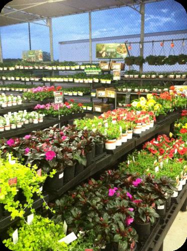Garden Centre: Garden Center At Walmart