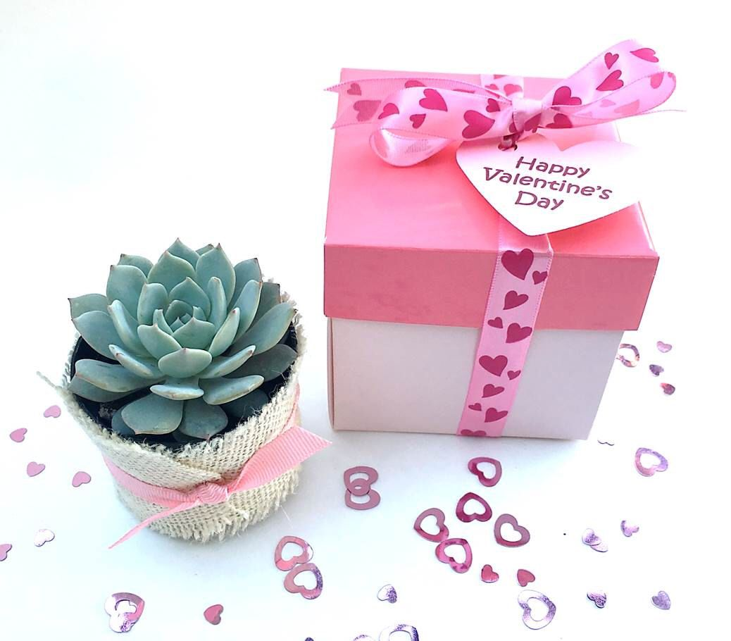 Valentine\'s Day or baby shower favors with live succulents. Your ...