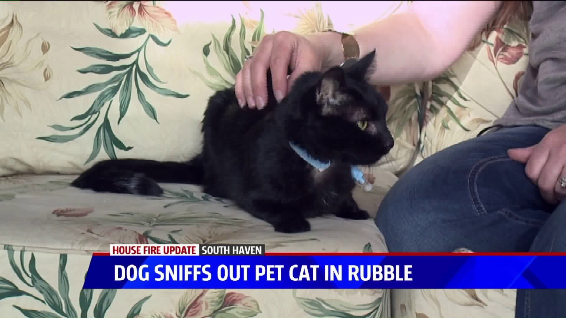 Family Dog Finds Missing Cat Alive Hiding In Floor Months After House Fire Cats Dogs Family Dogs
