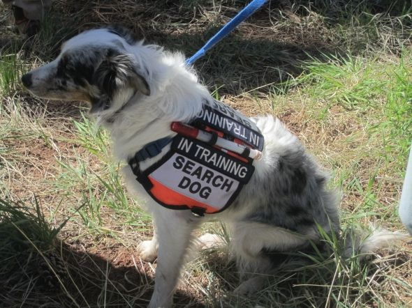 Search And Rescue Dogs Photo From Explore Org Search And Rescue