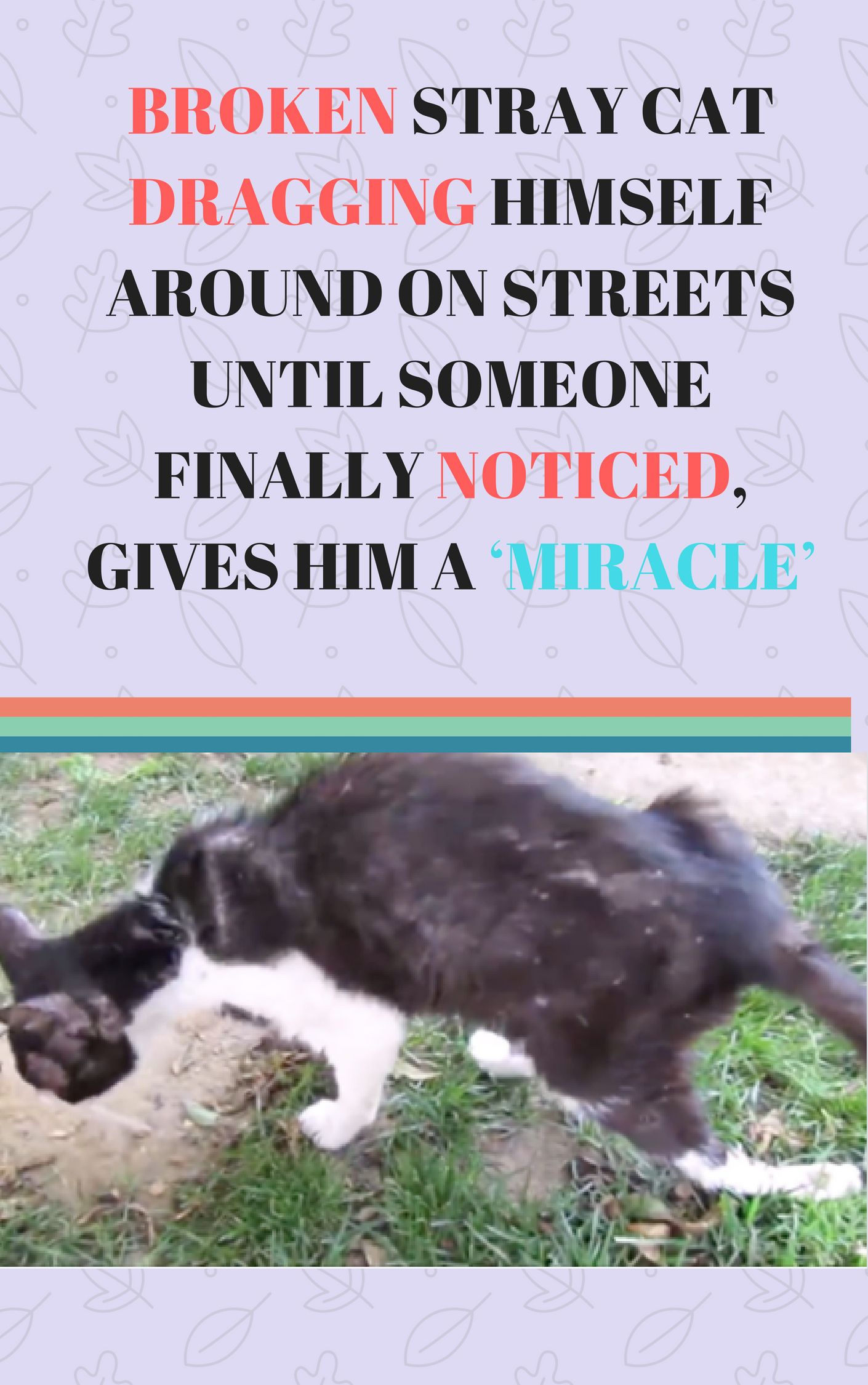 Broken Stray Cat Dragging Himself Around On Streets Until Someone Finally Noticed Gives Him A Miracle Stray Cat Cats And Kittens Animal Rescue Stories