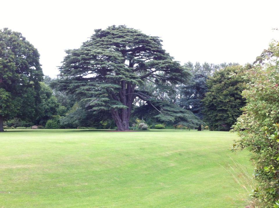Um carvalho de 500 anos,no Jardim do Malahire Castle.Irlanda.