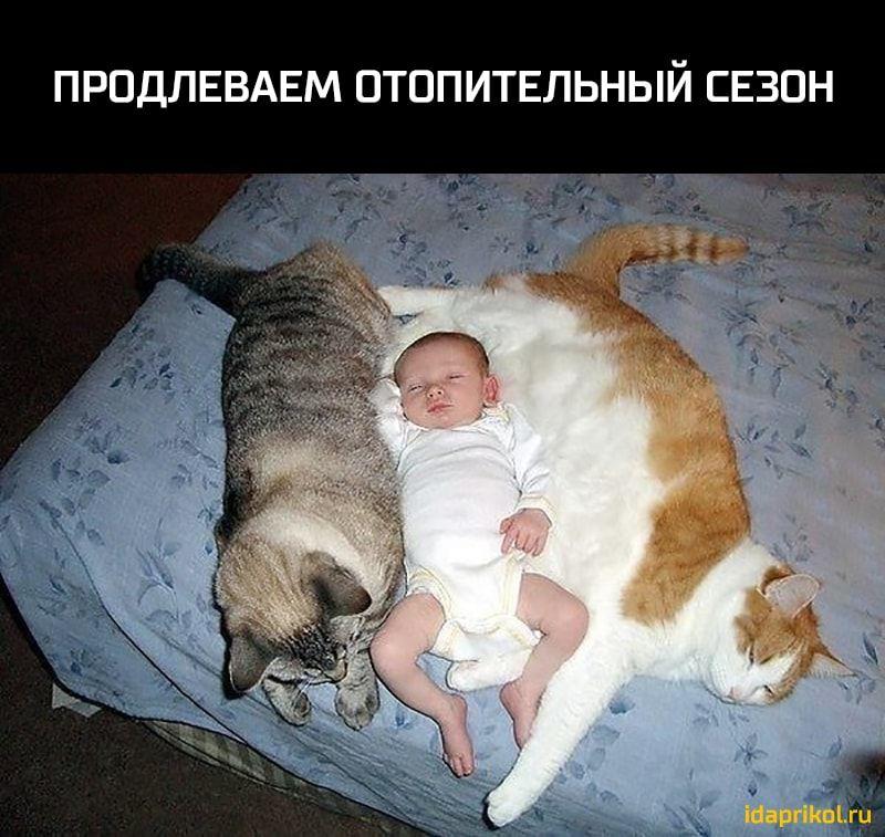 смешные до слез картинки с котами и младенцами загрузка