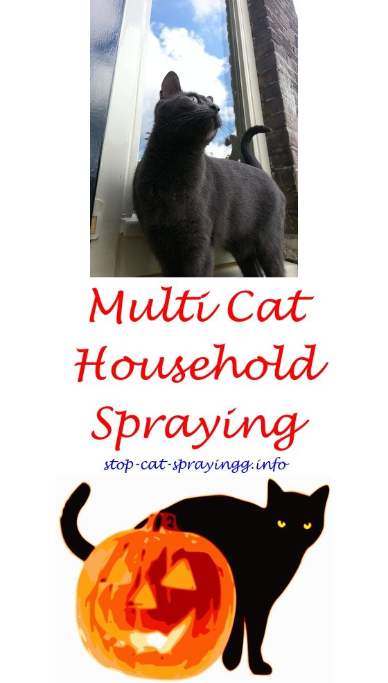 Litter Box Cat Spray Flea And Tick Sleeping On Couch Inhaling Can All Cats