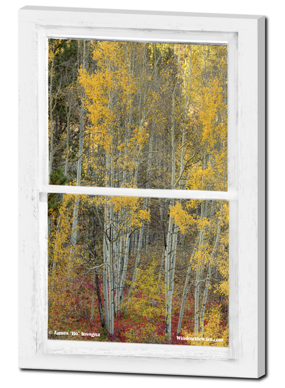 "Your very own private window view into a mystical enchanting forest. Portrait view of beautiful red underbrush with an aspen tree forest through a white distressed rustic farmhouse picture window.  Aspen Forest Red Wilderness Floor Rustic Window View 24""x36""x1.25"" Premium Canvas Gallery Wrap"