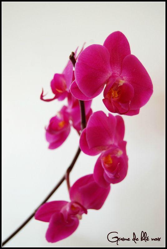Rempotage orchidée | Maison et jardin | Pinterest | Rempotage ...