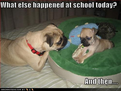 Back To School Doggies Cute Pic Funny Dog Pictures Cute