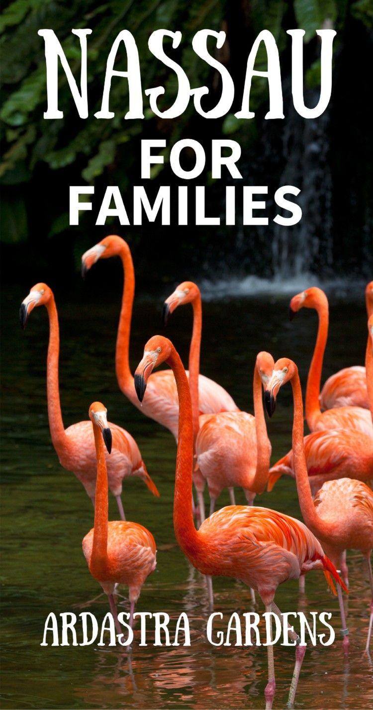 9a5fd98ace66689937c6a30af2bb4b14 - Nassau Bahamas Ardastra Gardens And Zoo