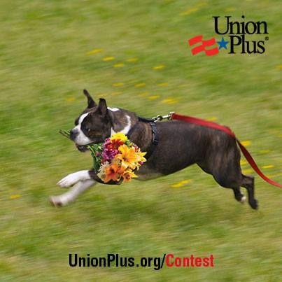 Have You Met Ruffy The Riveter The Union Plus Pet Www Unionplus Org Pets Pets Pet Insurance Quotes Cat Insurance