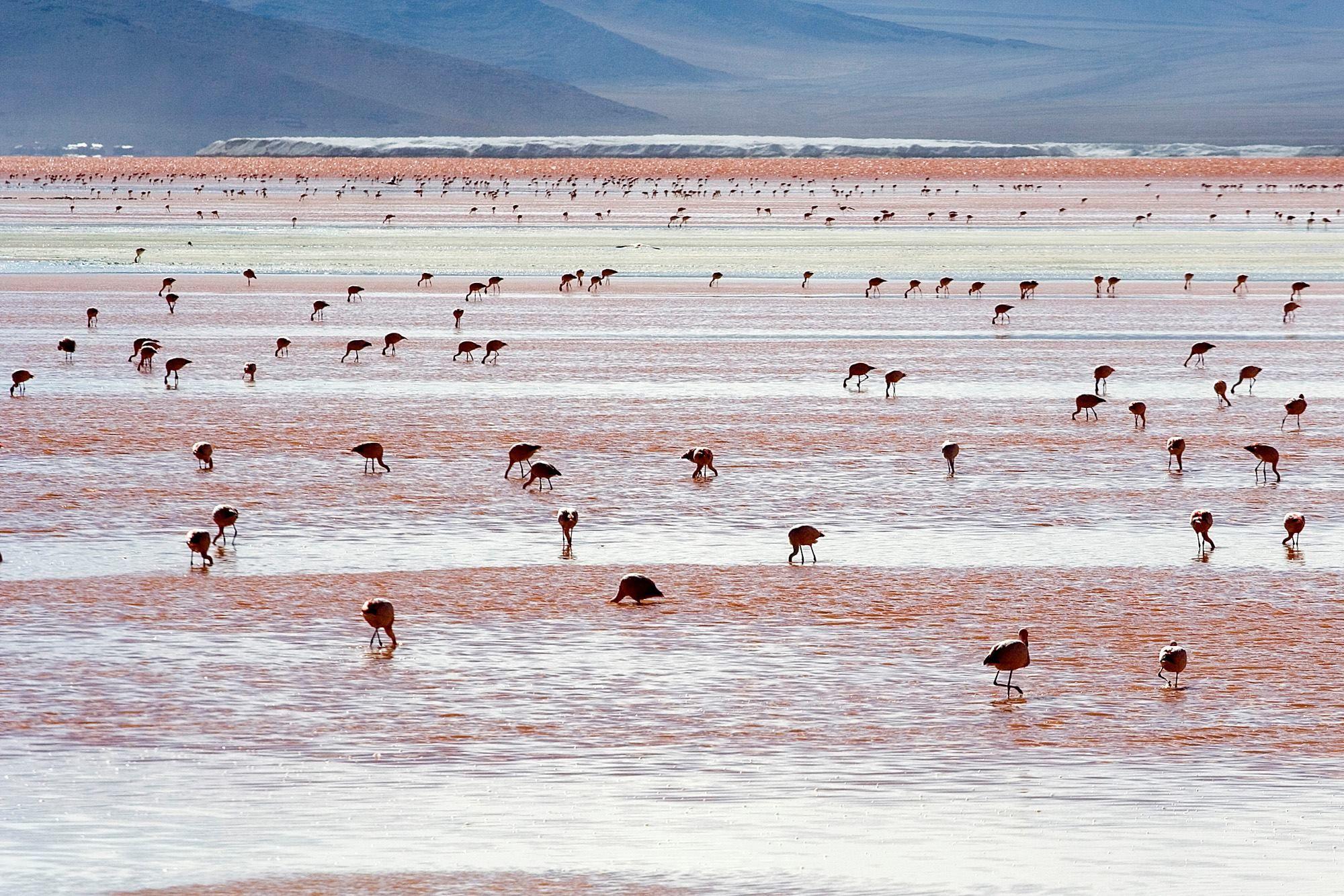 Laguna Colorada - Boliwia