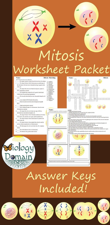 Mitosis Worksheets | Mitosis, Worksheets, Meiosis