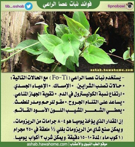 الطب النبوي والتداوي بالاعشاب فوائد نبات عصا الراعي Health Nutrition Plants