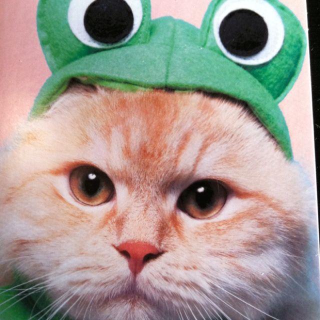 Cat-frog.