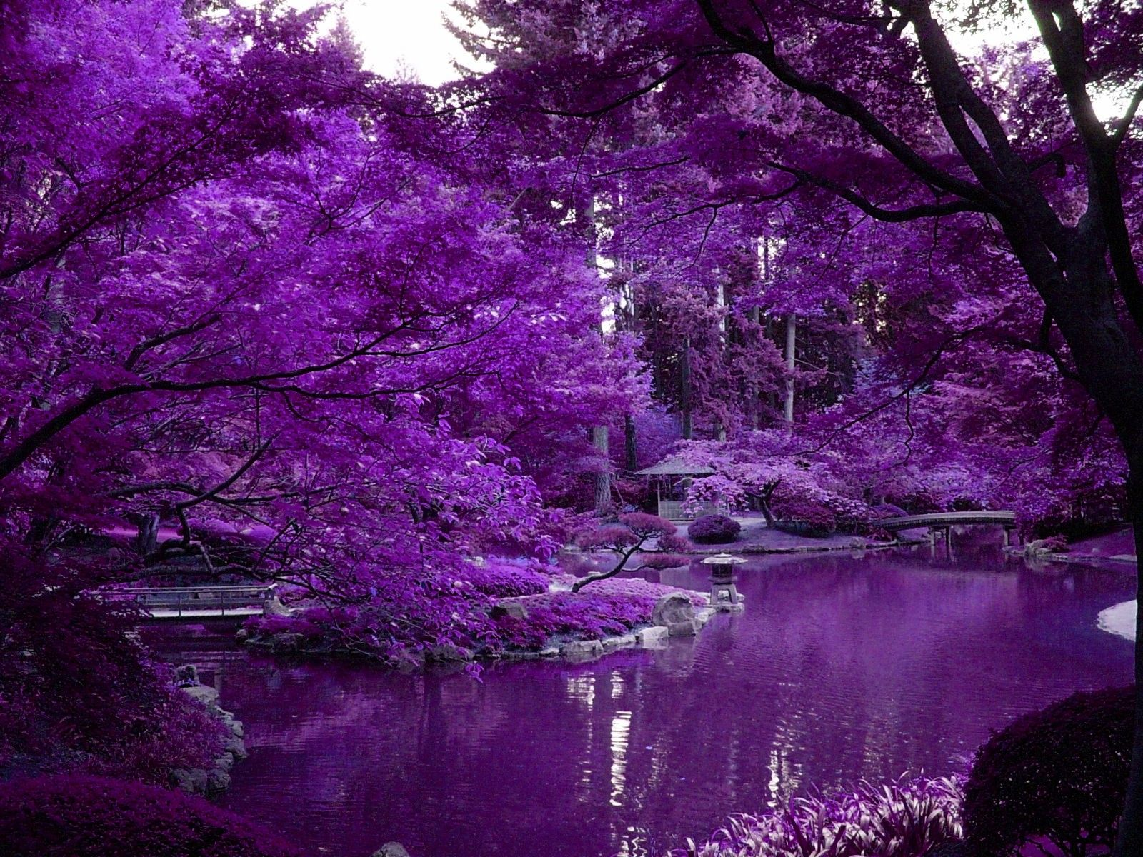 Japanese garden flowers lake garden spring beautiful art - Purple Japanese Garden Lakes Wallpaper Id 1144707 Desktop Nexus Nature