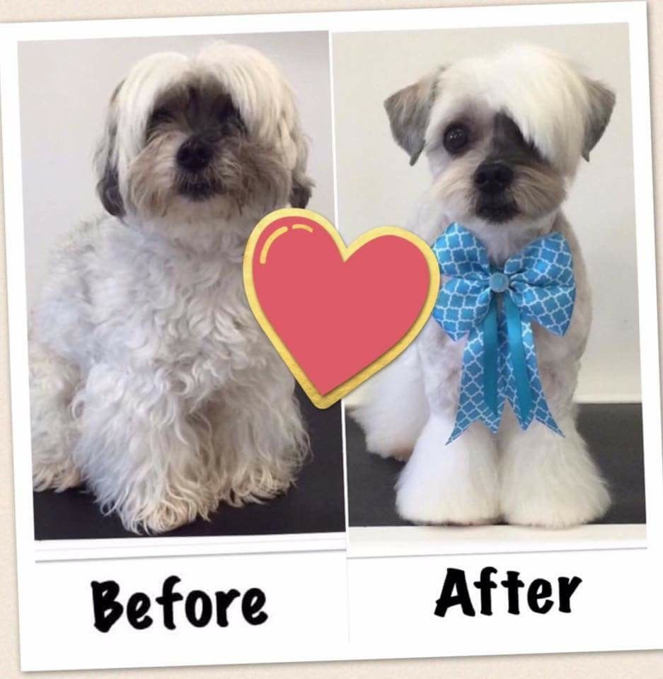 "pin by the groomers profit generating kit on ""before"" & ""after"
