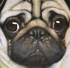 Pug Painting Looks Like My Daisy Pugs Cute Pugs Pug Art