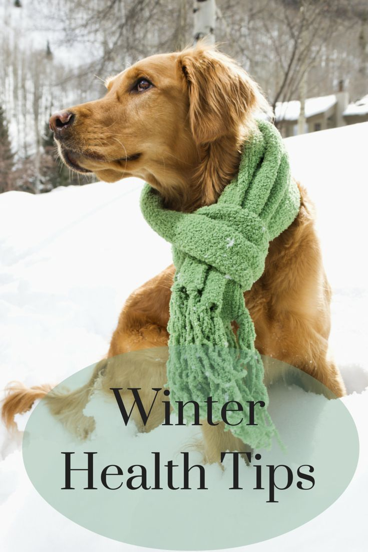 Do You Need Flea and Tick Meds in the Winter? Frontline