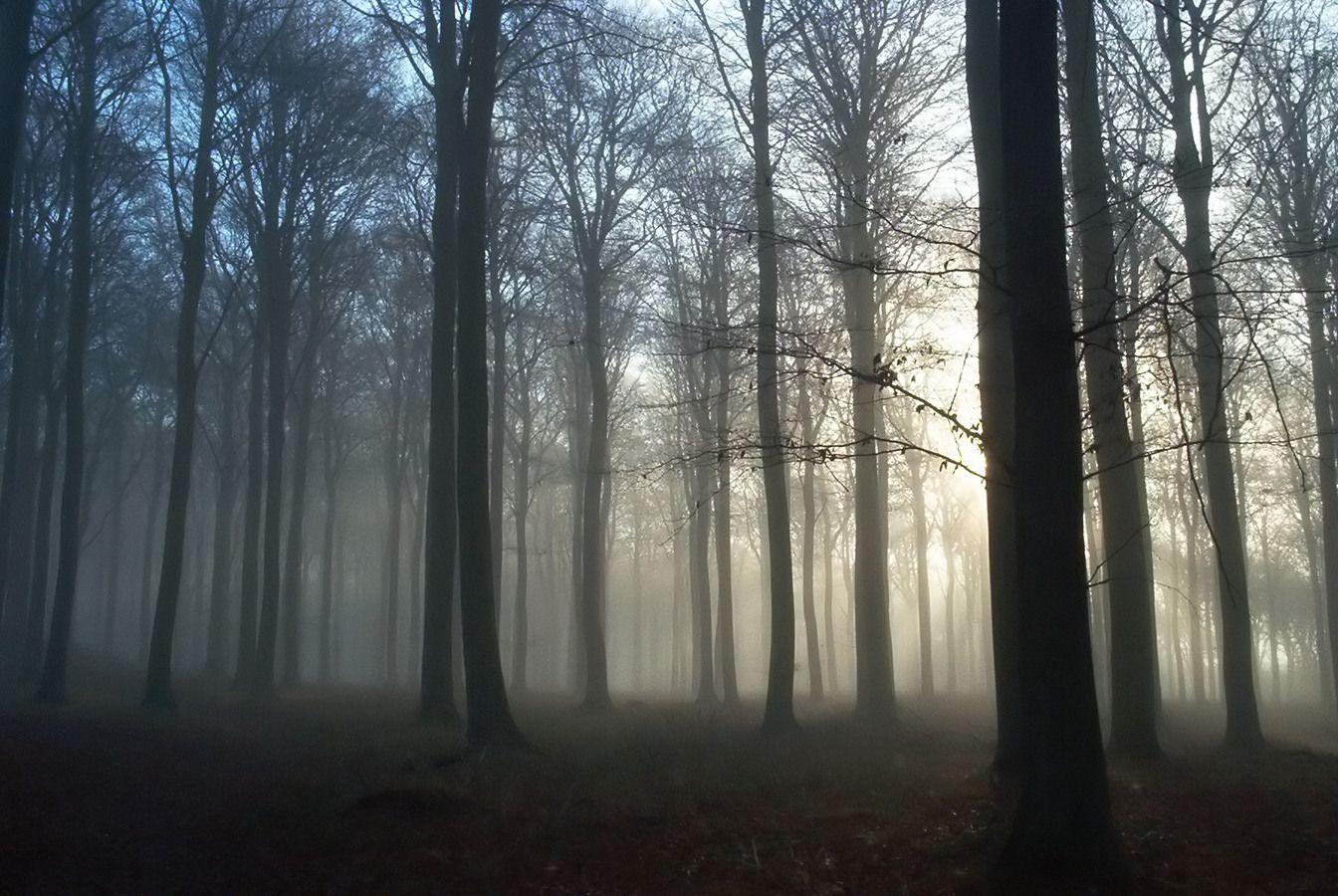 Картинка слендермена в лесу