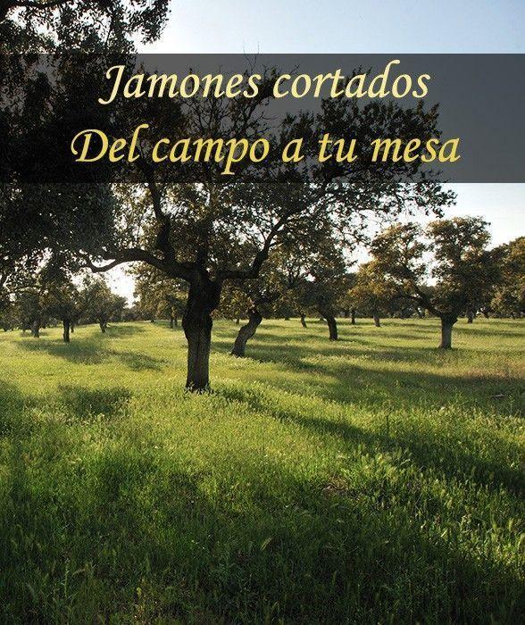 Venta De Jamones Online Jamonalcorte Net Quiere Degustar La