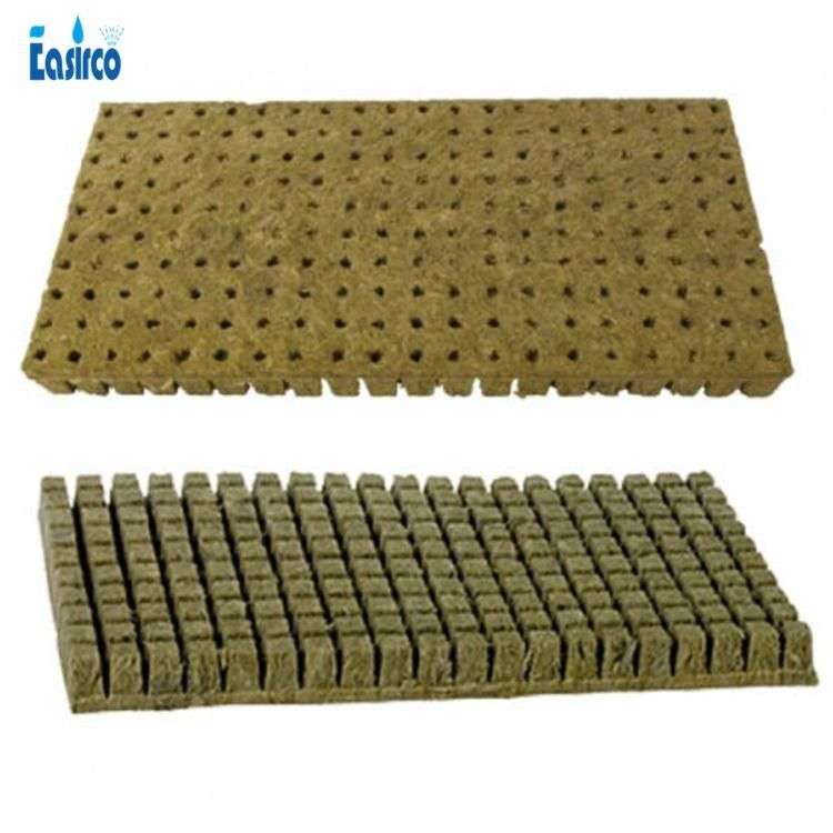 how to plant weed seeds in rockwool cubes
