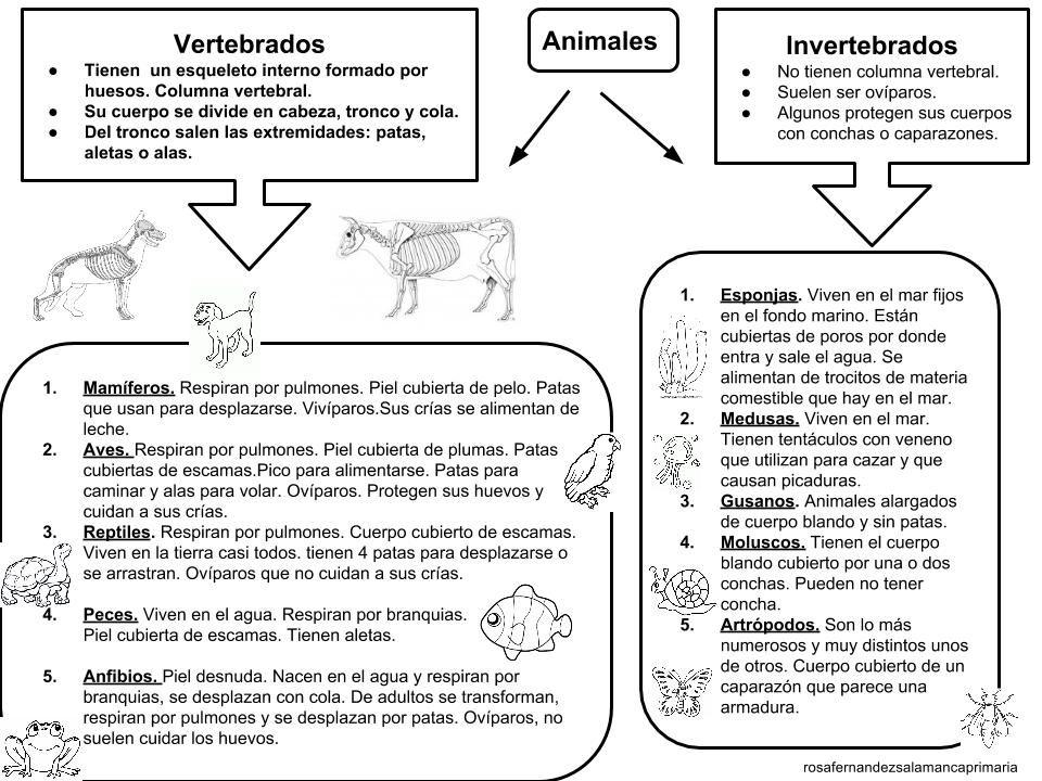 Resultado de imagen para animales vertebrados | ANIMALES VERTEBRADOS ...