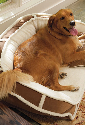 Retains warmth for cozy comfort! Pet bed, Comfy couch