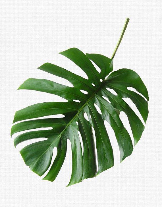 Tropical Leaf Print Monstera Print Printable by honeytreeprints