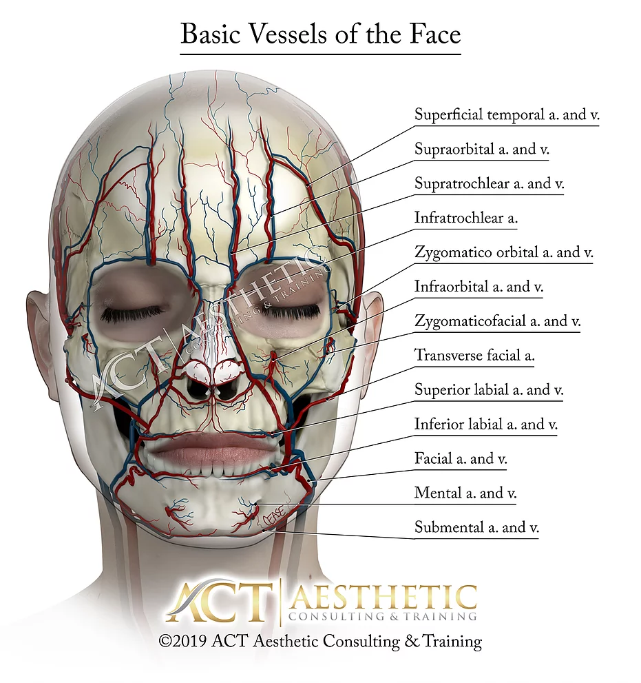 Basic Vessels Of The Face Artbykevincease Facial Aesthetics Aesthetic Medicine Aesthetic Dermatology