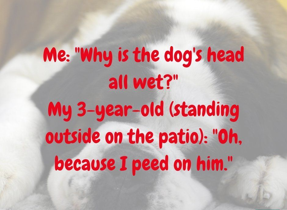 Pee On The Dog Funny Pictures Quotes Memes Jokes Quotes For Kids Friday Quotes Funny Funny Quotes Sarcasm