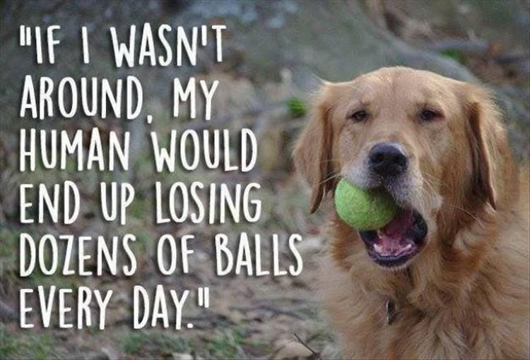 Funny Animal Pictures Of The Day 25 Pics Dog Thoughts Funny