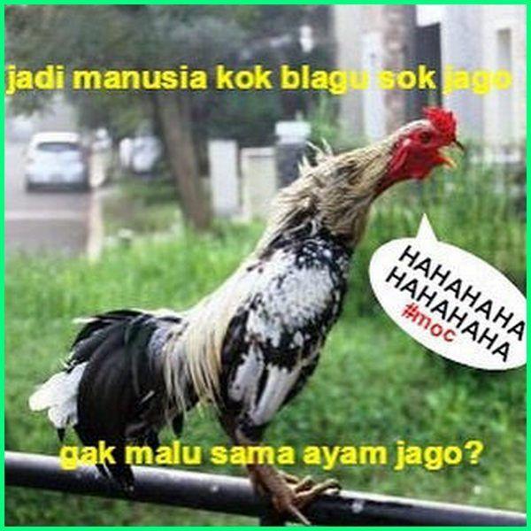 12 Meme Ayam Paling Gokil Dan Kocak Yang Bikin Ngakak Dunia Fauna Hewan Binatang Tumbuhan Gambar Lucu Hewan Meme