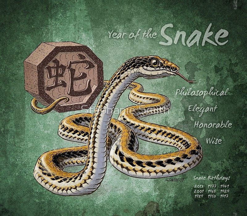 Year Of The Snake From The Chinese Zodiac Calendar By Stephanie