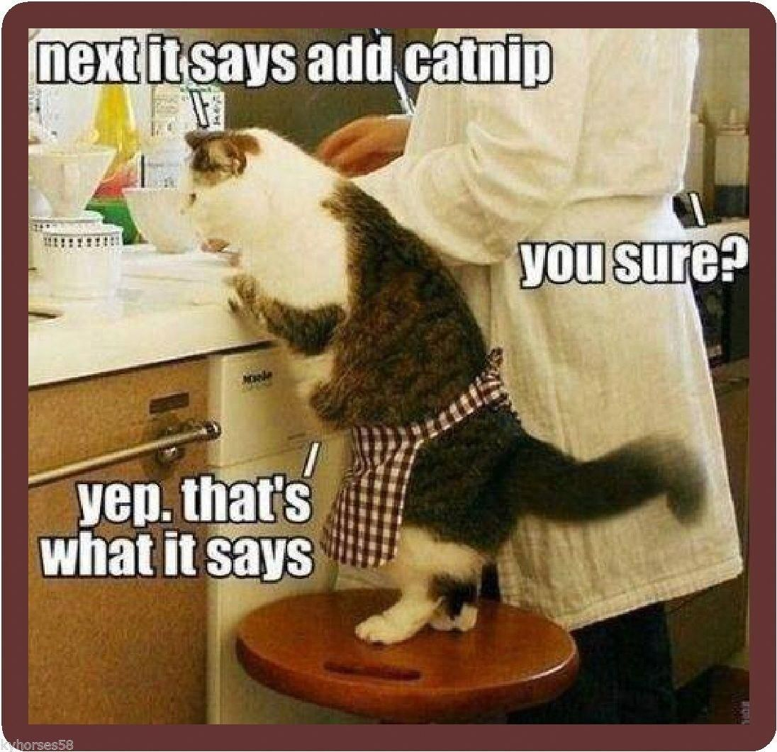 Details about Funny Cat Humor Cat Helping In Kitchen