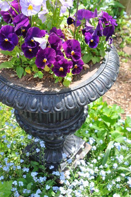 Spring Pansies Container Planting Urn With Pansies Spring
