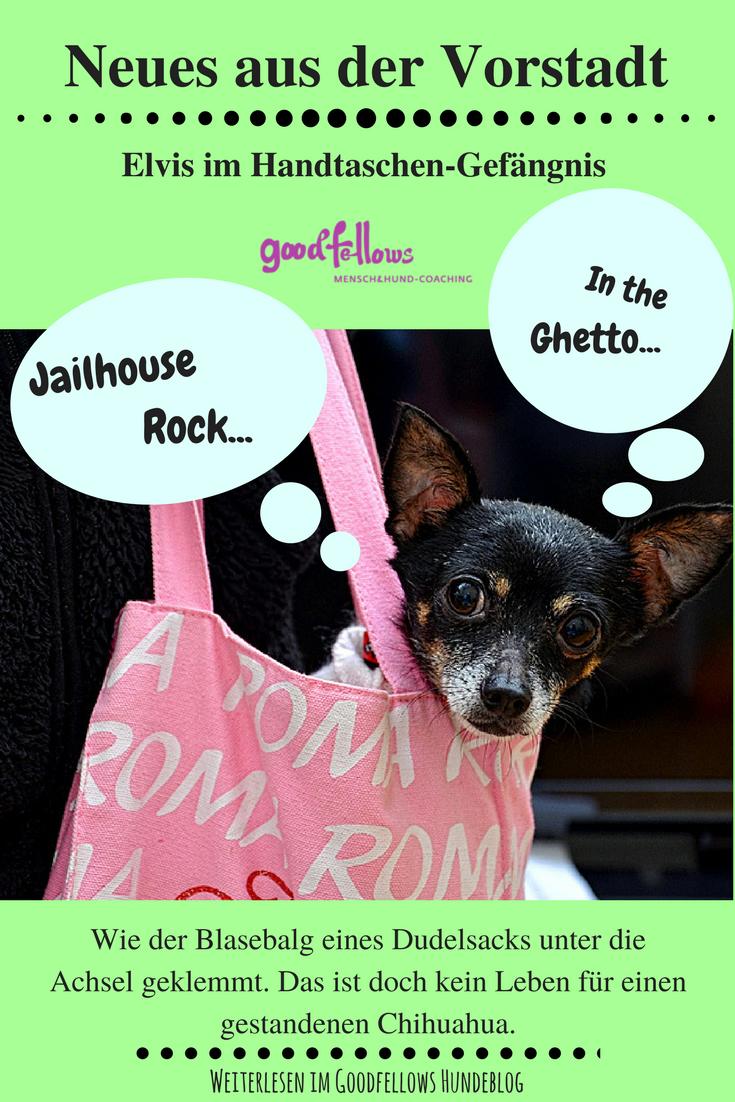 Elvis Im Handtaschen Gefangnis Goodfellows Chihuahua Kleine Hunde Hundchen Training