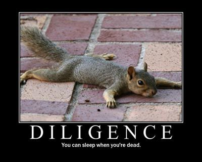 Diligent squirrel is diligent. Animals Doing Funny Stuff